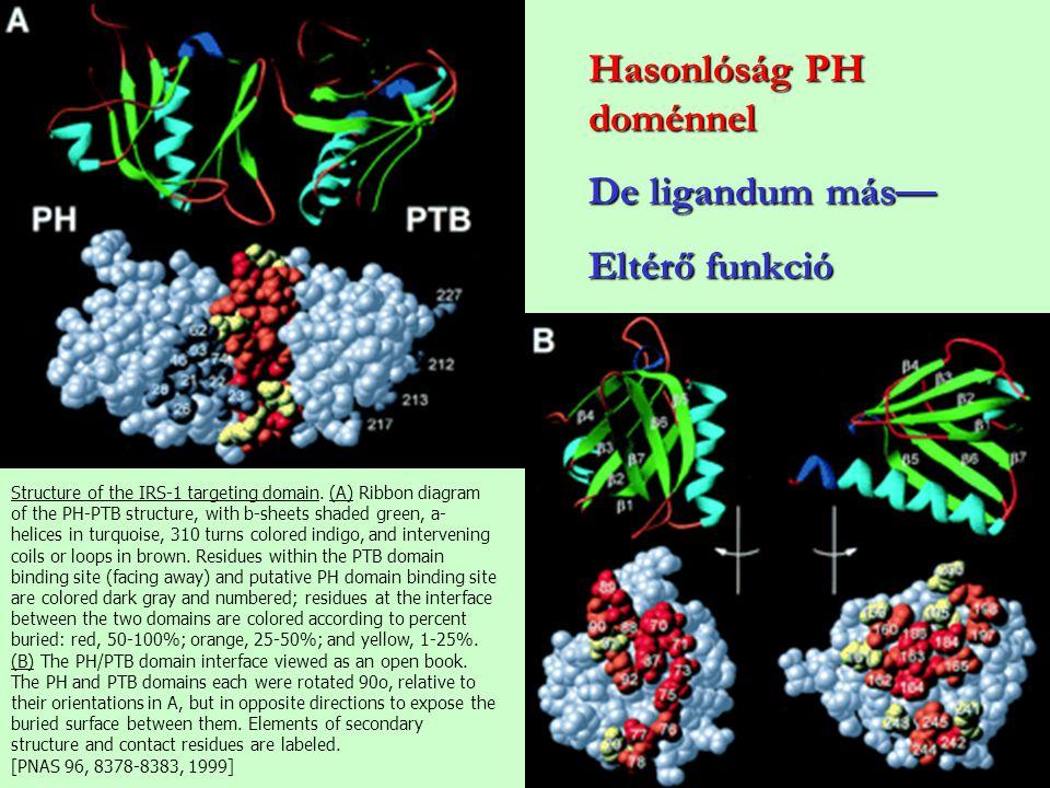 Hasonlóság PH doménnel De ligandum más— Eltérő funkció