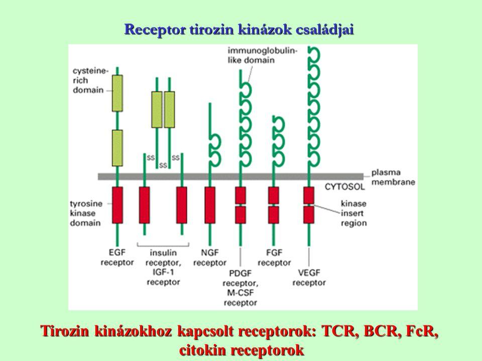Receptor tirozin kinázok családjai