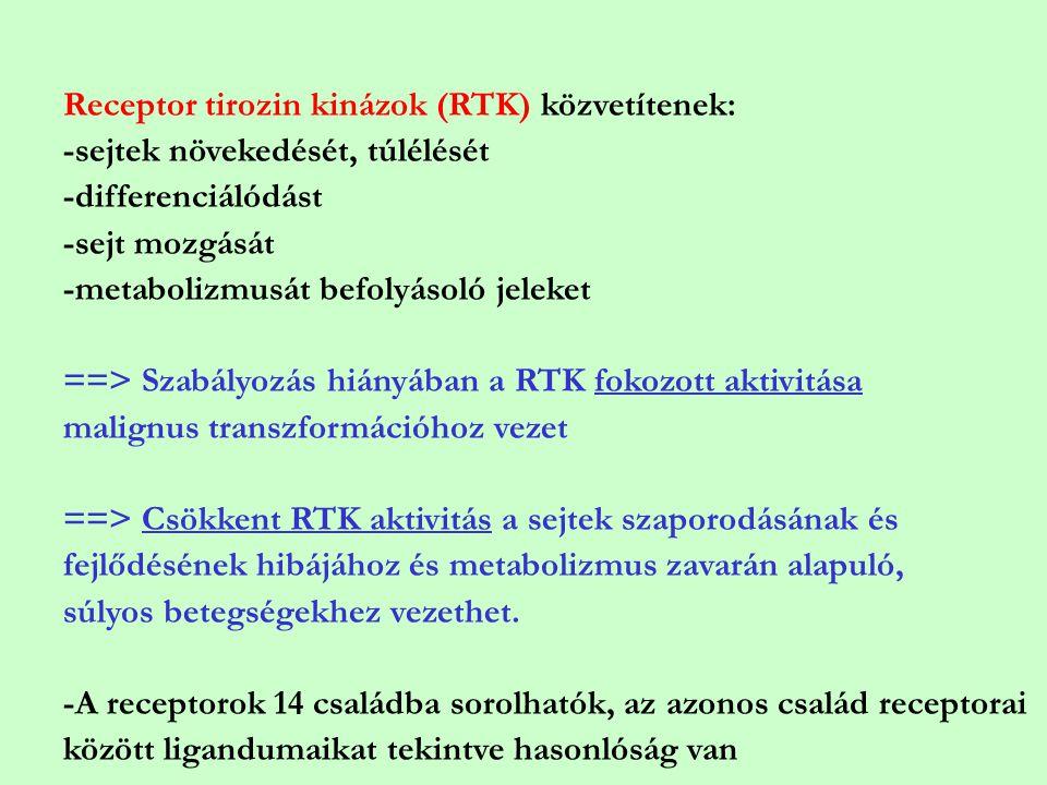 Receptor tirozin kinázok (RTK) közvetítenek: