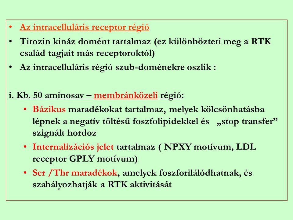 Az intracelluláris receptor régió