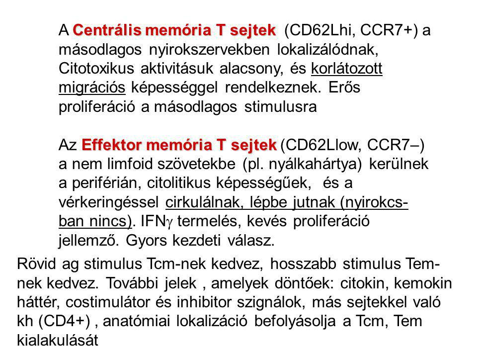 A Centrális memória T sejtek (CD62Lhi, CCR7+) a másodlagos nyirokszervekben lokalizálódnak,