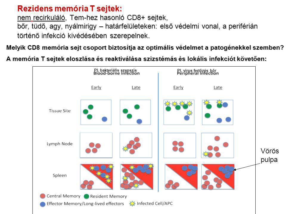 Rezidens memória T sejtek: nem recirkuláló, Tem-hez hasonló CD8+ sejtek, bőr, tüdő, agy, nyálmirigy – határfelületeken: első védelmi vonal, a periférián történő infekció kivédésében szerepelnek.
