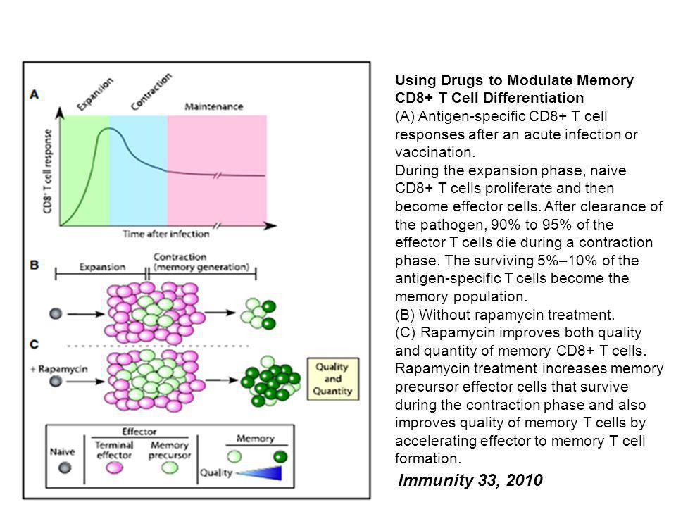 Using Drugs to Modulate Memory CD8+ T Cell Differentiation
