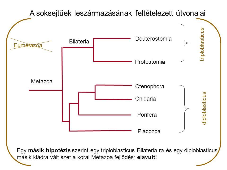 A soksejtűek leszármazásának feltételezett útvonalai