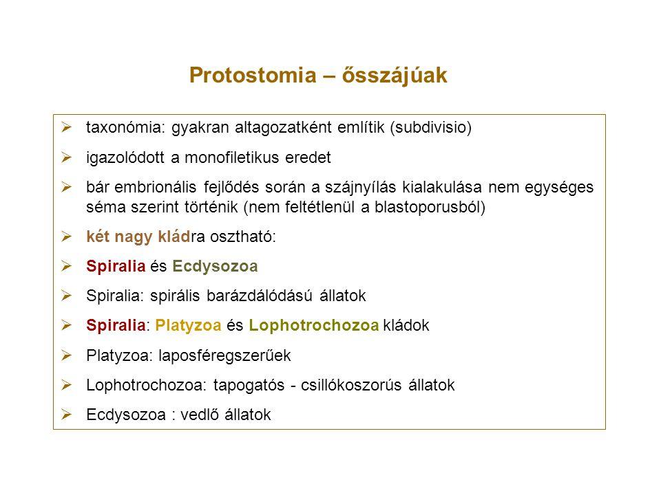 Protostomia – ősszájúak