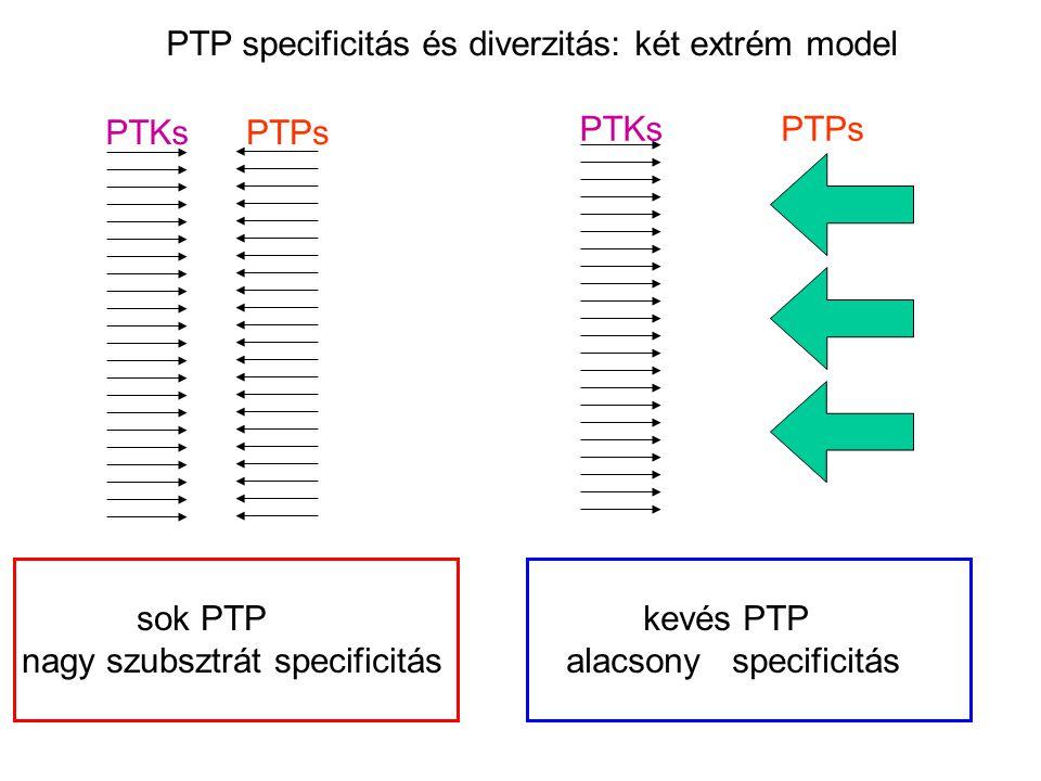 PTP specificitás és diverzitás: két extrém model