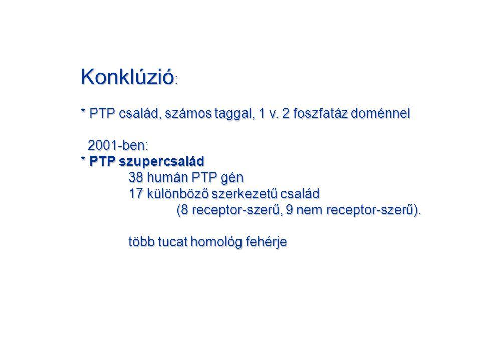 Konklúzió: * PTP család, számos taggal, 1 v. 2 foszfatáz doménnel