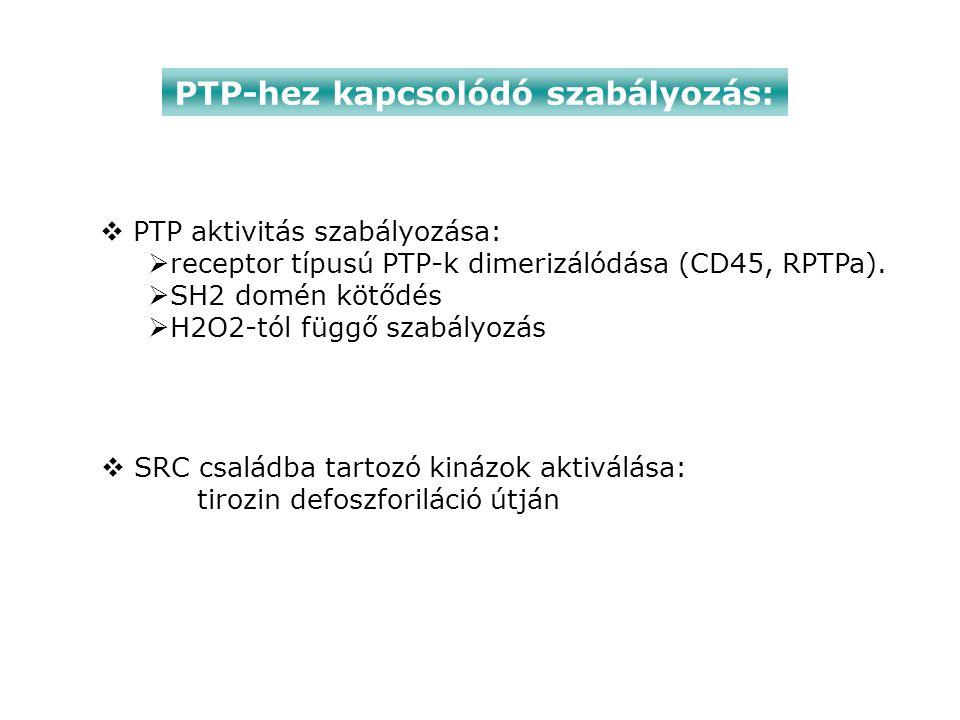 PTP-hez kapcsolódó szabályozás: