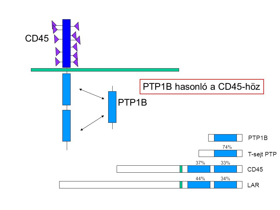 CD45 PTP1B hasonló a CD45-höz PTP1B PTP1B T-sejt PTP CD45 LAR 74%