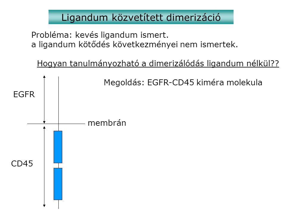Ligandum közvetített dimerizáció