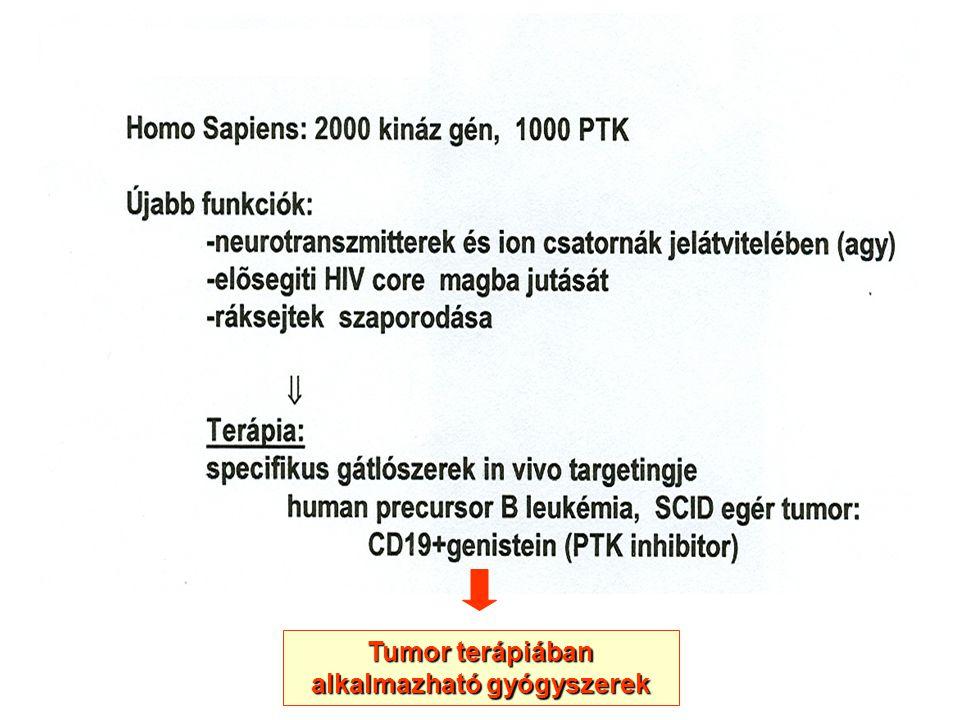 Tumor terápiában alkalmazható gyógyszerek