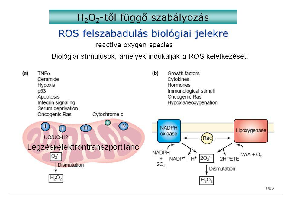 H2O2-től függő szabályozás