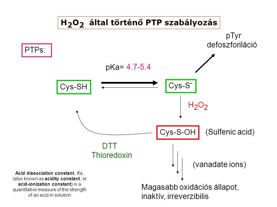 H2O2 által történő PTP szabályozás