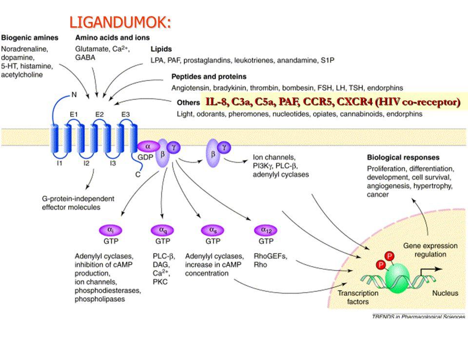 LIGANDUMOK: IL-8, C3a, C5a, PAF, CCR5, CXCR4 (HIV co-receptor)