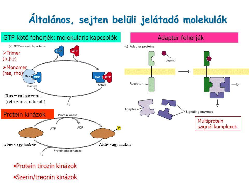 Általános, sejten belüli jelátadó molekulák