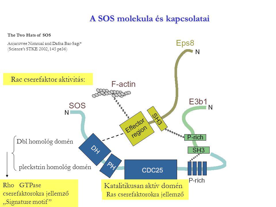 A SOS molekula és kapcsolatai