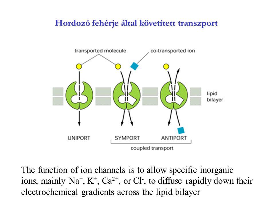 Hordozó fehérje által követített transzport