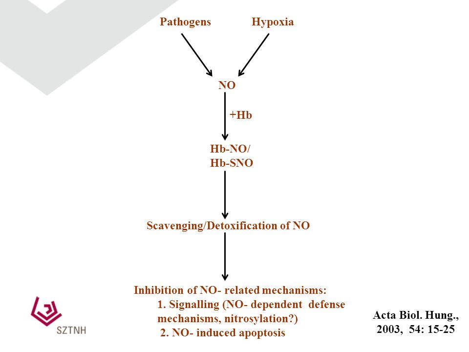 Inhibition of NO- related mechanisms: