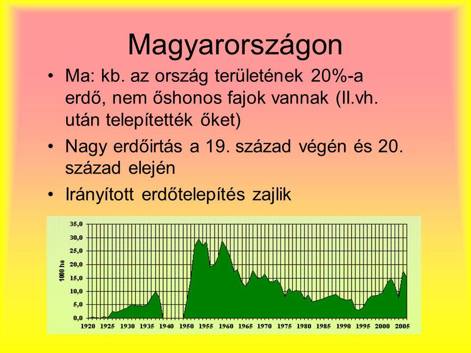 Magyarországon Ma: kb. az ország területének 20%-a erdő, nem őshonos fajok vannak (II.vh. után telepítették őket)