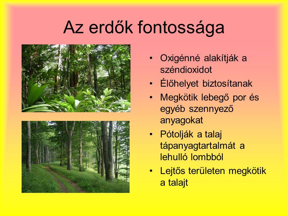 Az erdők fontossága Oxigénné alakítják a széndioxidot