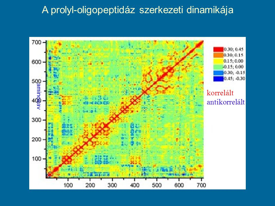 A prolyl-oligopeptidáz szerkezeti dinamikája