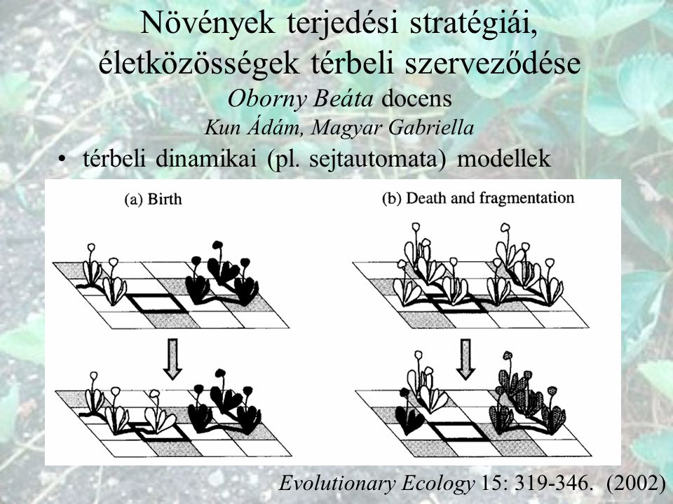 Növények terjedési stratégiái, életközösségek térbeli szerveződése Oborny Beáta docens Kun Ádám, Magyar Gabriella