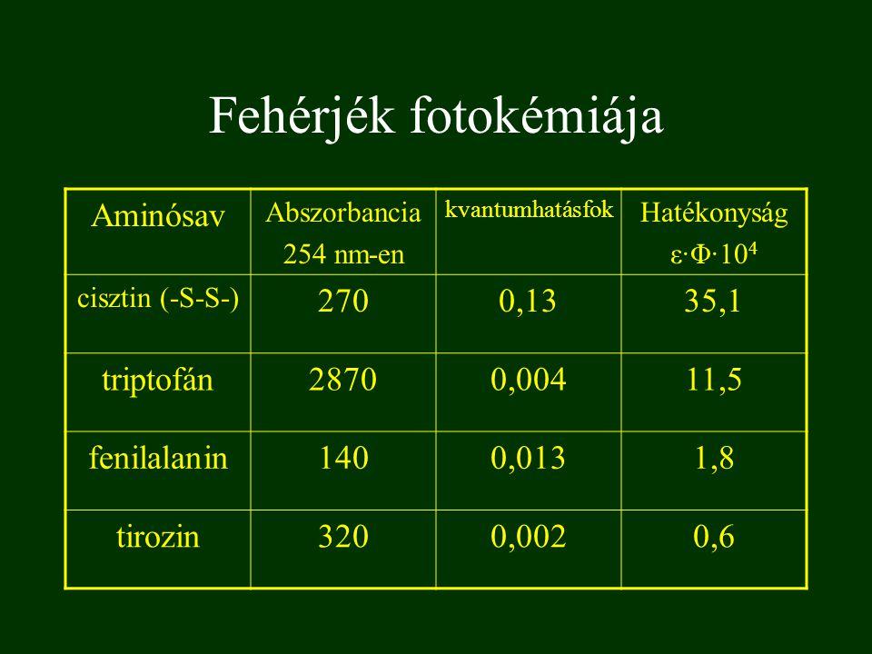 Fehérjék fotokémiája Aminósav 270 0,13 35,1 triptofán 2870 0,004 11,5