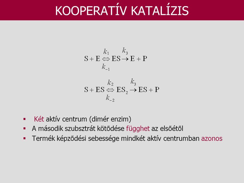 KOOPERATÍV KATALÍZIS Két aktív centrum (dimér enzim)