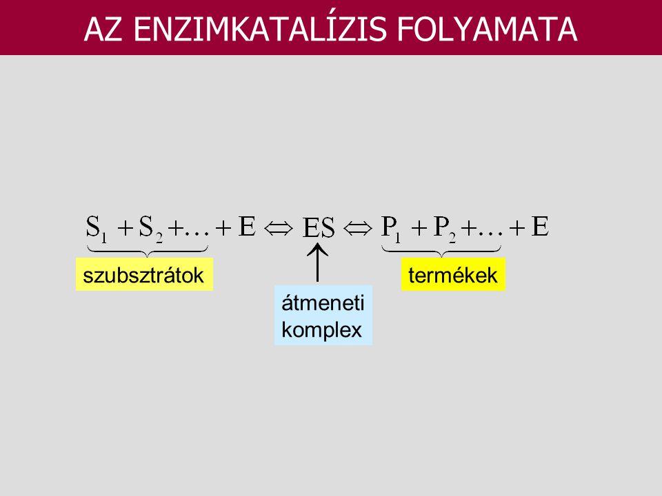 AZ ENZIMKATALÍZIS FOLYAMATA