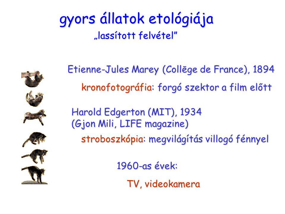 gyors állatok etológiája