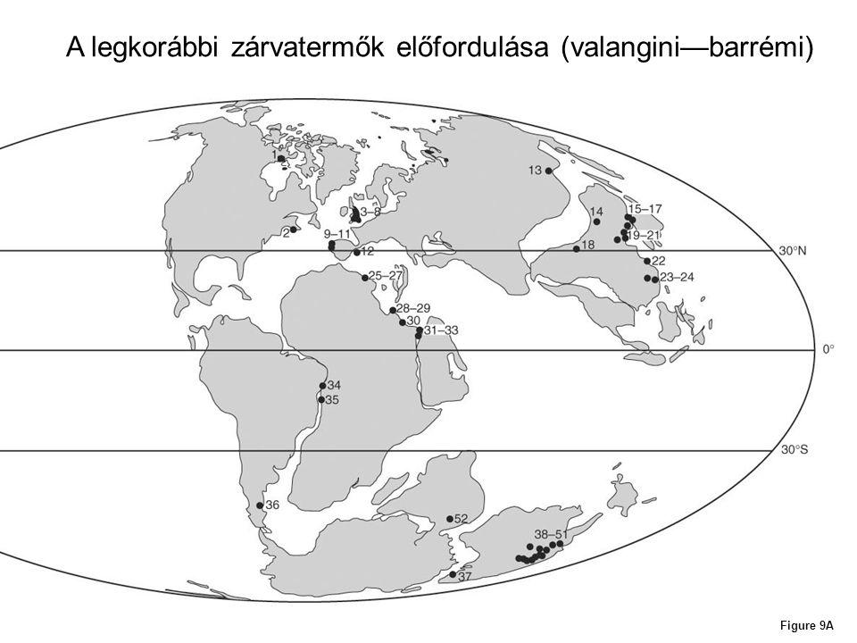 A legkorábbi zárvatermők előfordulása (valangini—barrémi)