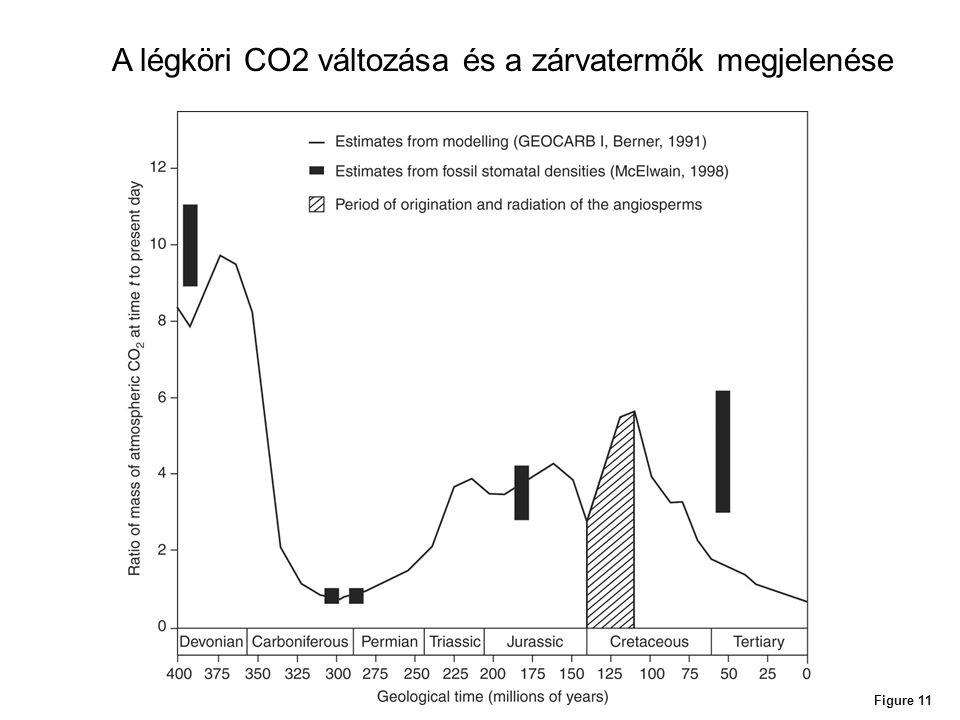 A légköri CO2 változása és a zárvatermők megjelenése