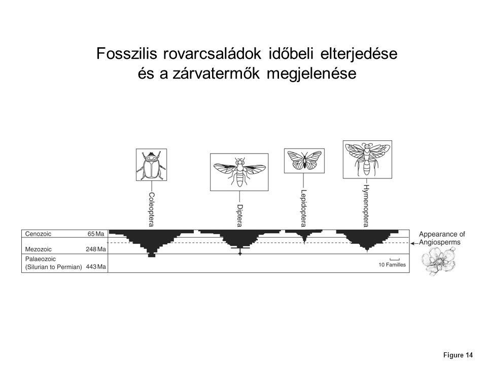 Fosszilis rovarcsaládok időbeli elterjedése