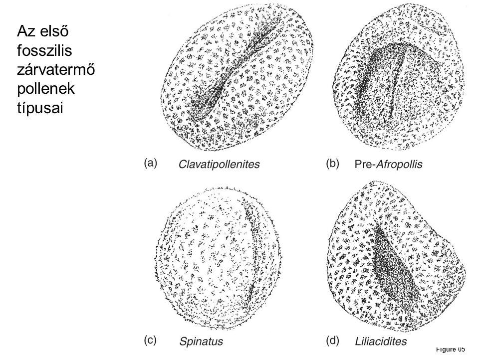 Az első fosszilis zárvatermő pollenek típusai