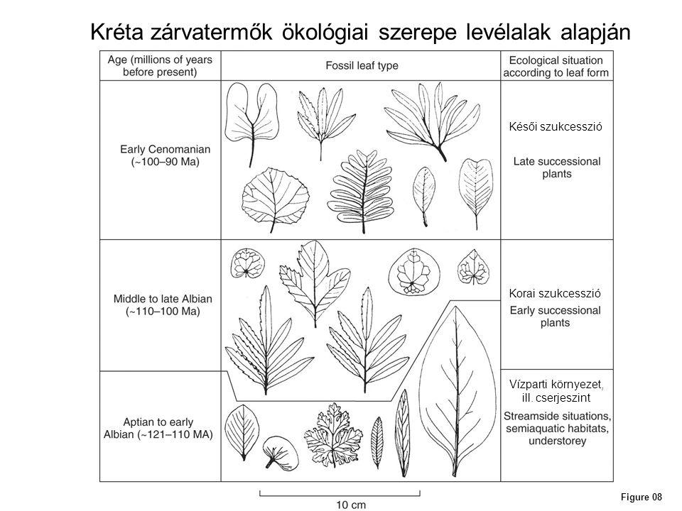 Kréta zárvatermők ökológiai szerepe levélalak alapján