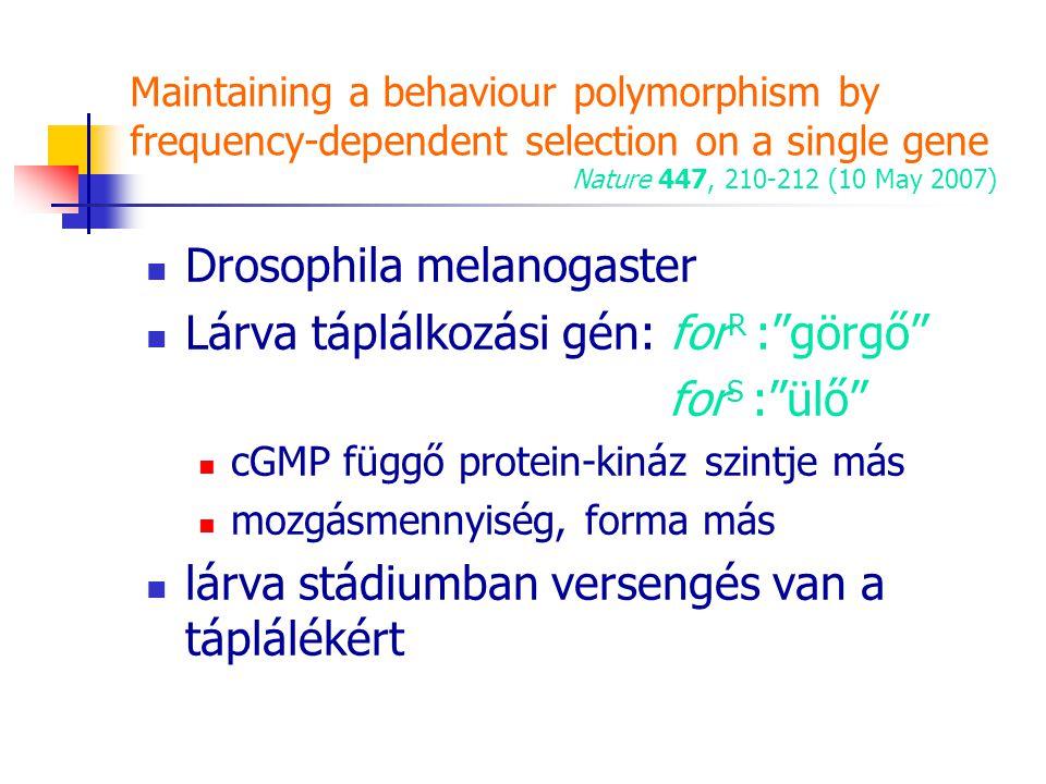 Drosophila melanogaster Lárva táplálkozási gén: forR : görgő