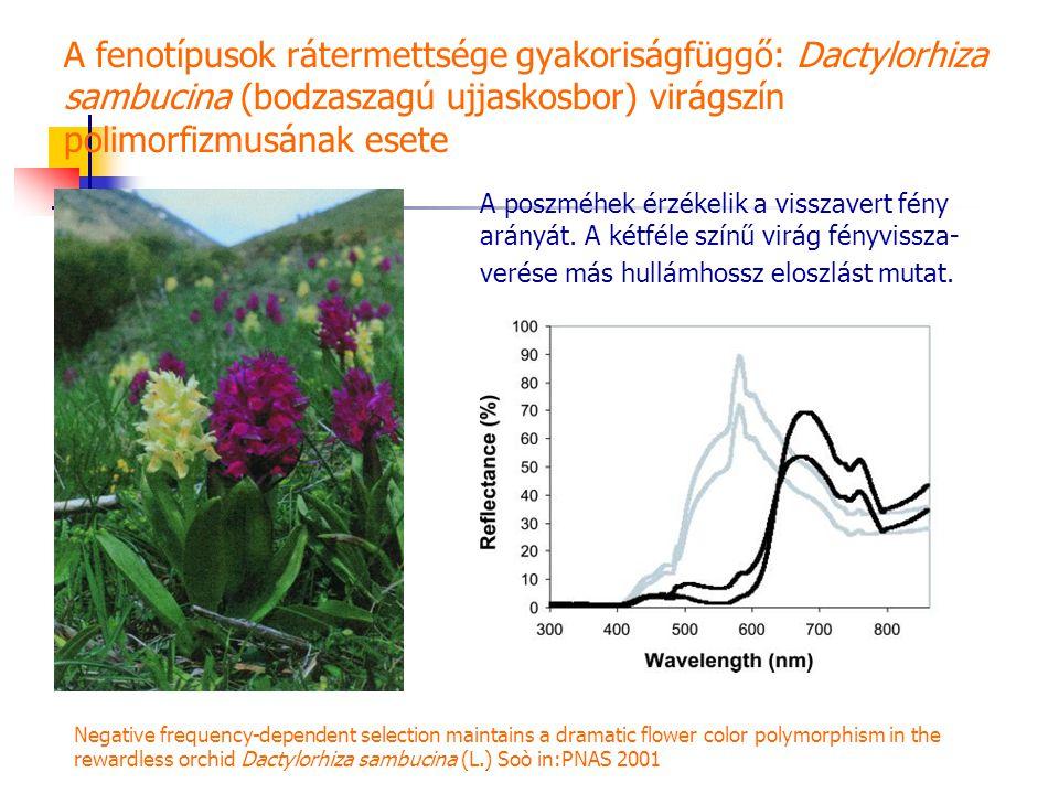 A fenotípusok rátermettsége gyakoriságfüggő: Dactylorhiza sambucina (bodzaszagú ujjaskosbor) virágszín polimorfizmusának esete
