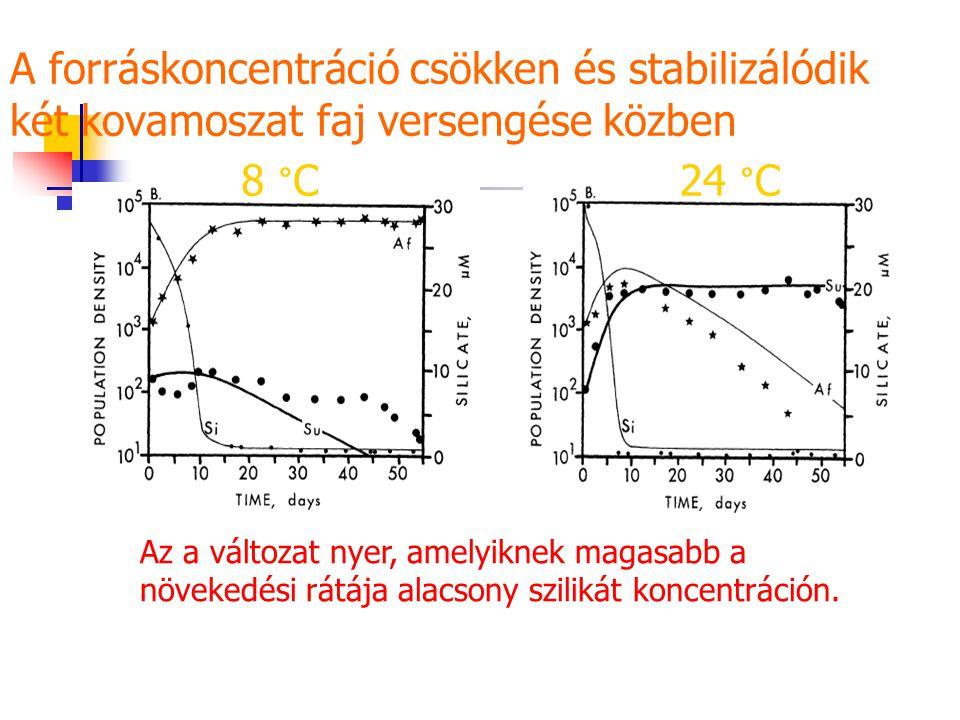 A forráskoncentráció csökken és stabilizálódik két kovamoszat faj versengése közben