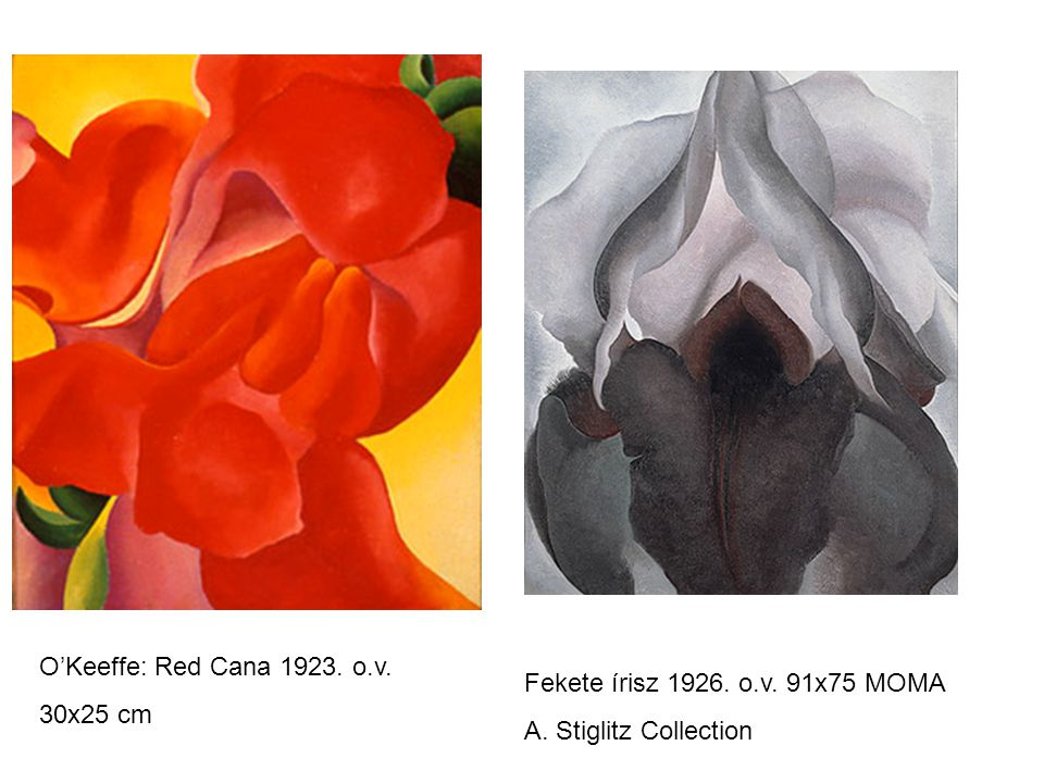 O'Keeffe: Red Cana 1923. o.v. 30x25 cm Fekete írisz 1926. o.v. 91x75 MOMA A. Stiglitz Collection