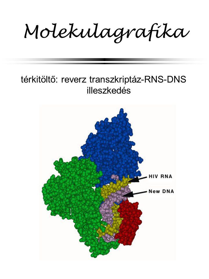 térkitöltő: reverz transzkriptáz-RNS-DNS illeszkedés