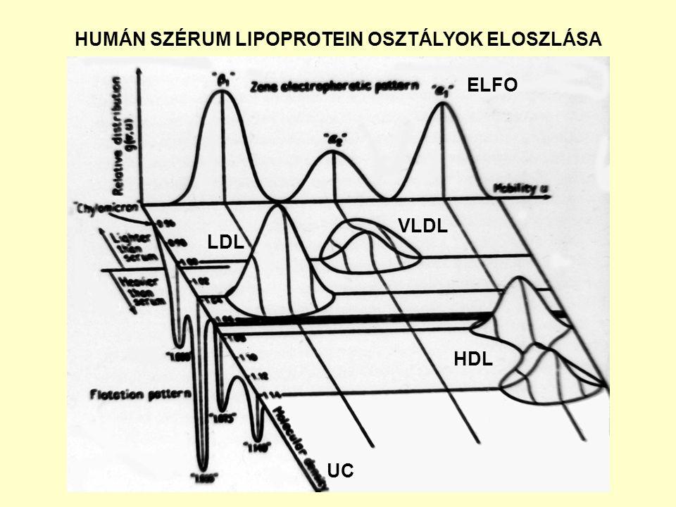 HUMÁN SZÉRUM LIPOPROTEIN OSZTÁLYOK ELOSZLÁSA