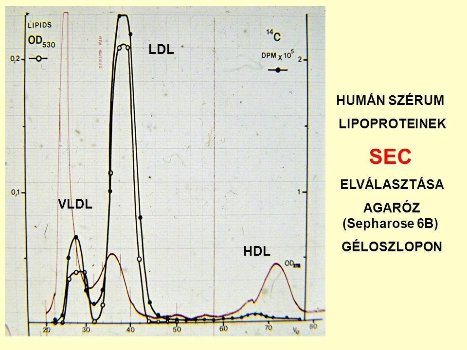 SEC LDL HUMÁN SZÉRUM LIPOPROTEINEK ELVÁLASZTÁSA AGARÓZ (Sepharose 6B)