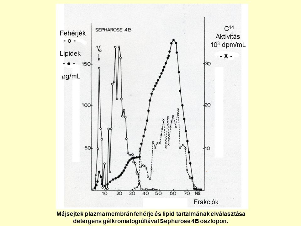 - o - - X - - ● - Májsejtek plazma membrán fehérje és lipid tartalmának elválasztása.
