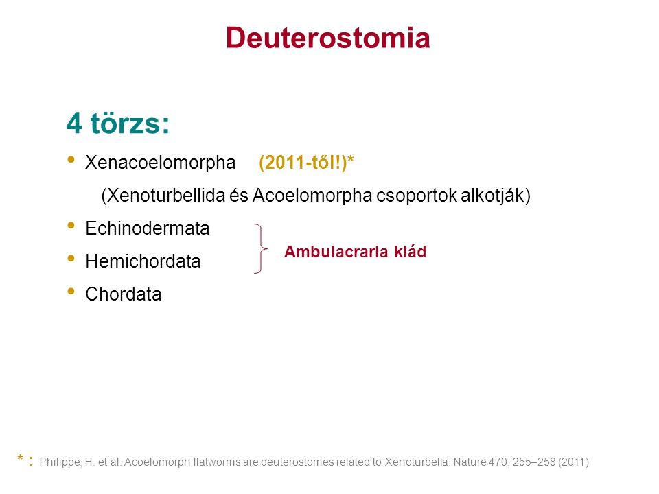 Deuterostomia 4 törzs: Xenacoelomorpha (2011-től!)*