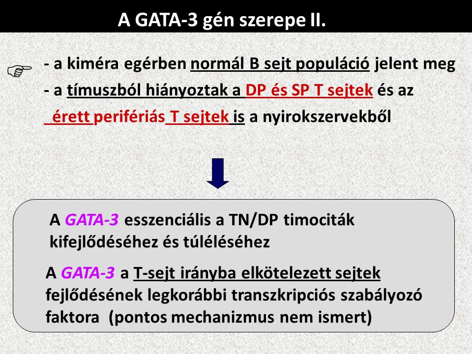A GATA-3 gén szerepe II. - a kiméra egérben normál B sejt populáció jelent meg. - a tímuszból hiányoztak a DP és SP T sejtek és az.