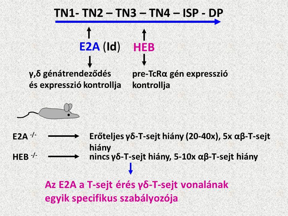 TN1- TN2 – TN3 – TN4 – ISP - DP E2A (Id) HEB