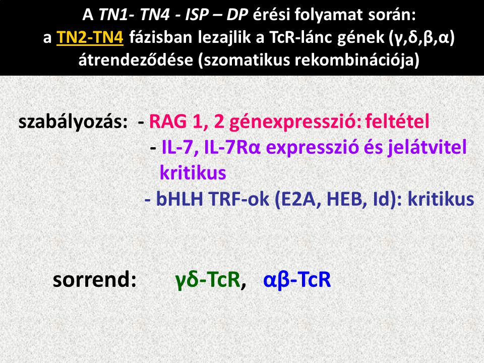 sorrend: γδ-TcR, αβ-TcR
