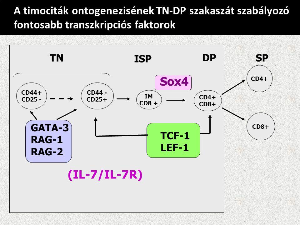 A timociták ontogenezisének TN-DP szakaszát szabályozó