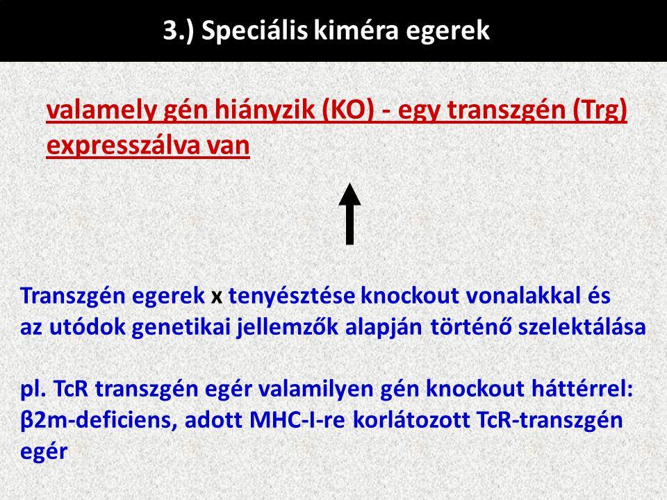 3.) Speciális kiméra egerek