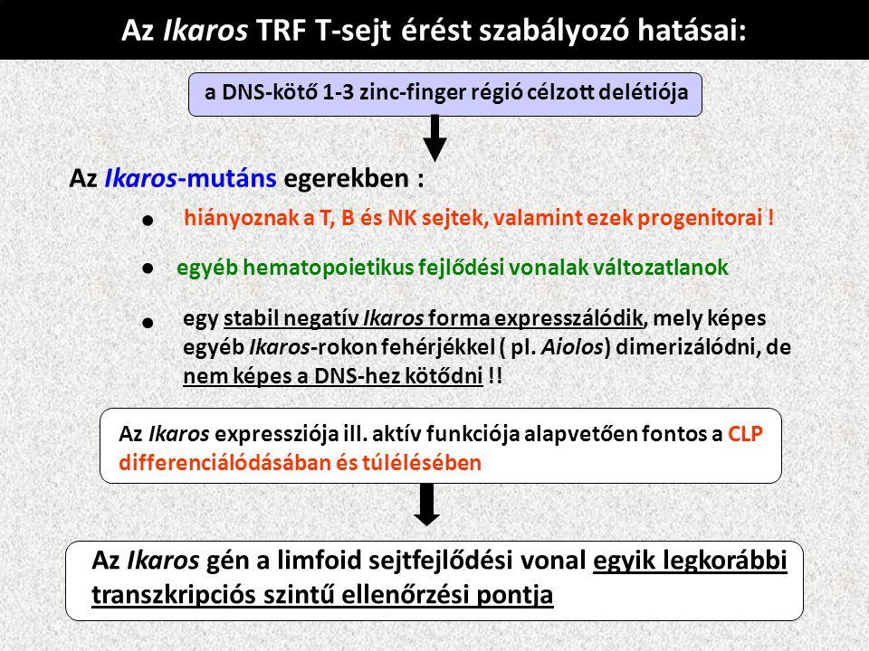 • • • Az Ikaros TRF T-sejt érést szabályozó hatásai: